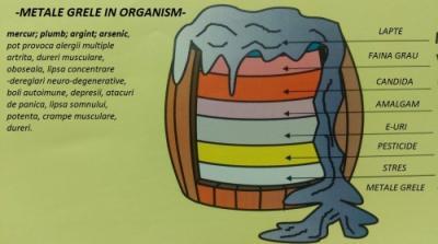 Sanatatea vine din intestine